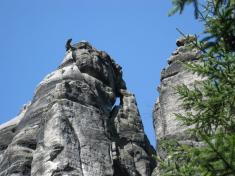 Kanec apes vTeplických skalách